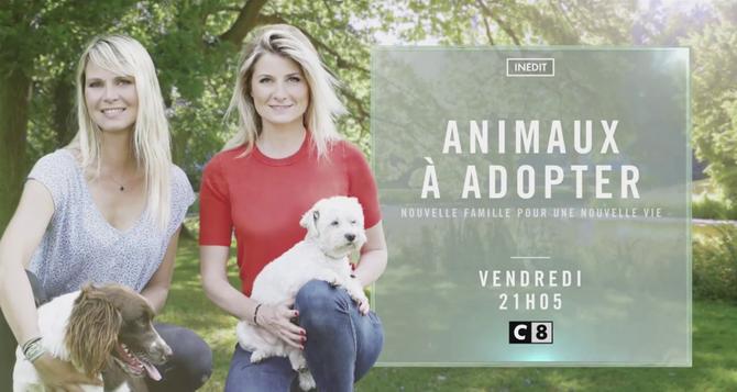 Bande Annonce Animaux A Adopter C8 Tous Les Vendredis Tele 7 Jours